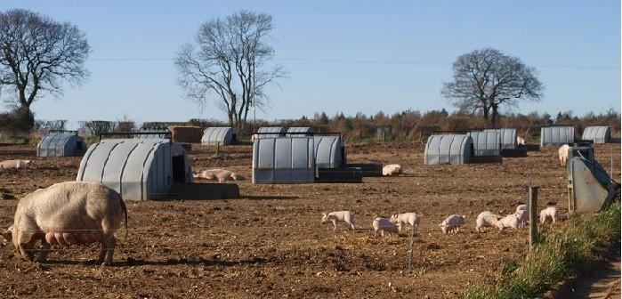 Con-Tented Ark in the field mr