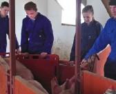 Aberdeen pig production module addresses sector recruitment concerns