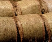 Straw prices for the week ending October 22, 2017 – more increases