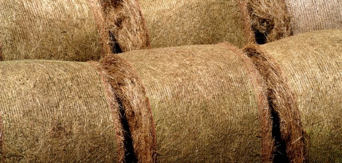 Straw prices for the week ending September 23 2018