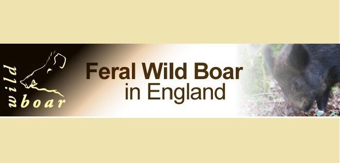 wild_boar logo