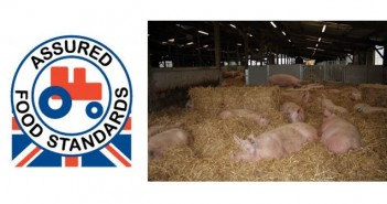 Red tractor + pigs in barn