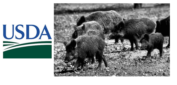 USDA Texas feral pigs