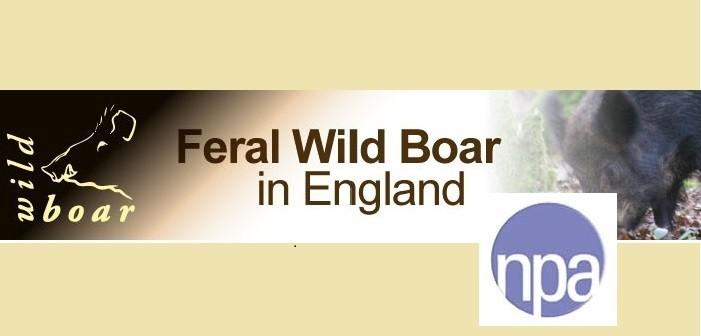wild_boar logo + NPA