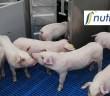 Nutreco pig research + logo