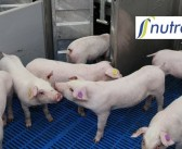 """Nutreco commits to """"anticipatory research"""" in pursuit of AMR solutions"""