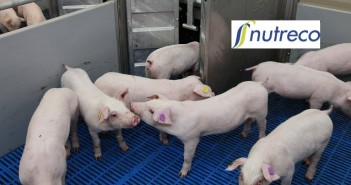Nutreco pig research + logo