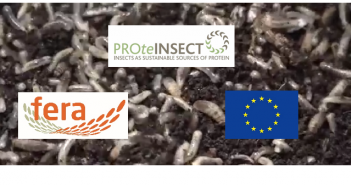 Insects plus agencies Oct 19