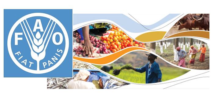 FAO 2050