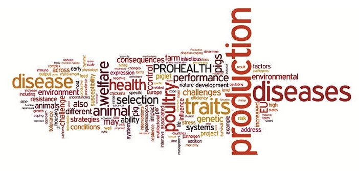 Prohealth_word_cloud
