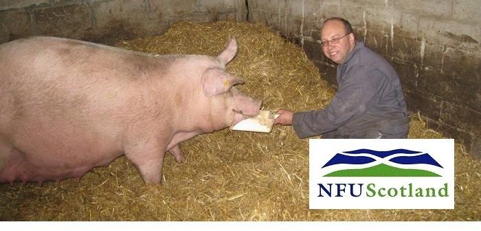 NFUS nKevin Gilbert Pigs III