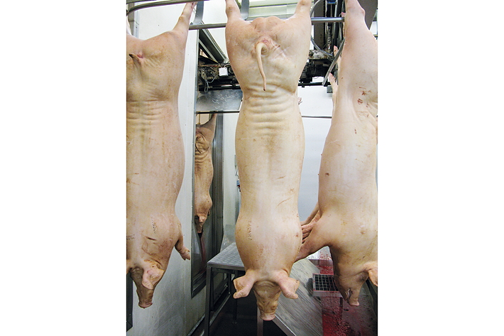 Accepted pig management practices in the UK could be working against the production of quality carcases