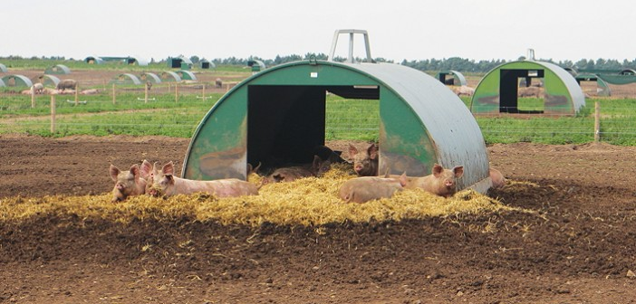 1603-Outdoor_sows