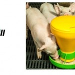 Cargill feeder