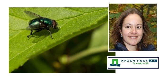 Dutch study finds problems in feed use of housefly larvae