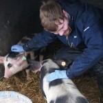 1607-Ashton-Pig_Handling