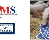 QMS tightens quality pork rules on recording antibiotic use