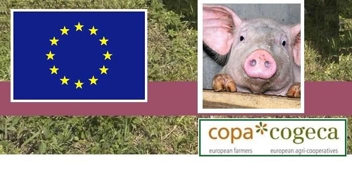 Copa EU pigs