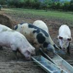 1. Pigworld Peckham