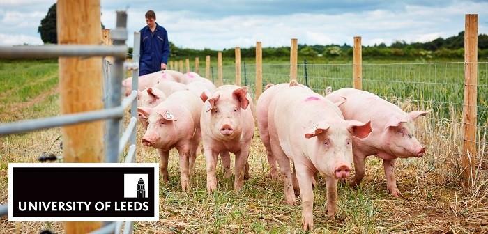 University of Leeds pigs + logo