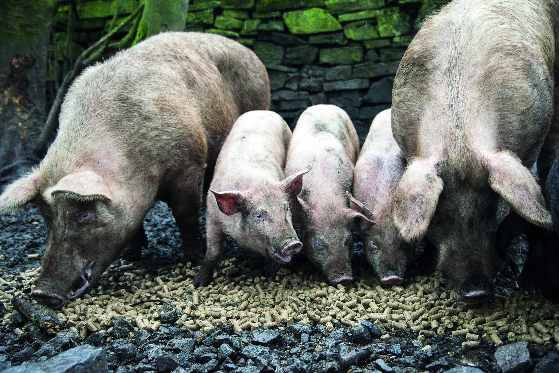 Unpredictability The Watchword For Farm Incomes Warns Nfu