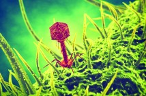 Bacteriophage virus 3d illustration (1024x768)