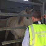 horsemeat arrests