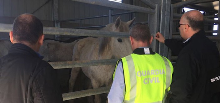 horsemeat arrests