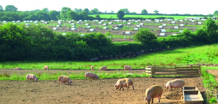 The UK is unique in the diversity of its pig production systems