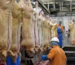 abattoir workers