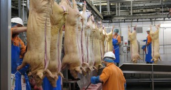 First half decline for EU pig meat production