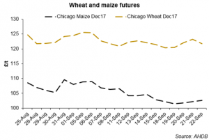 wheat and maize futures