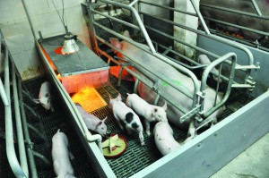 The report identified finding workable alternatives to the farrowing crate as an area for improvement