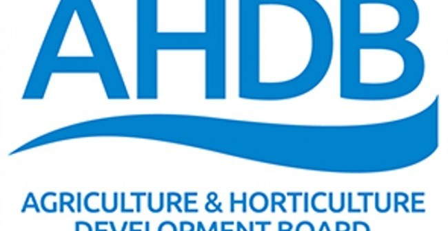 Former Genus executive to become AHDB Pork strategy director