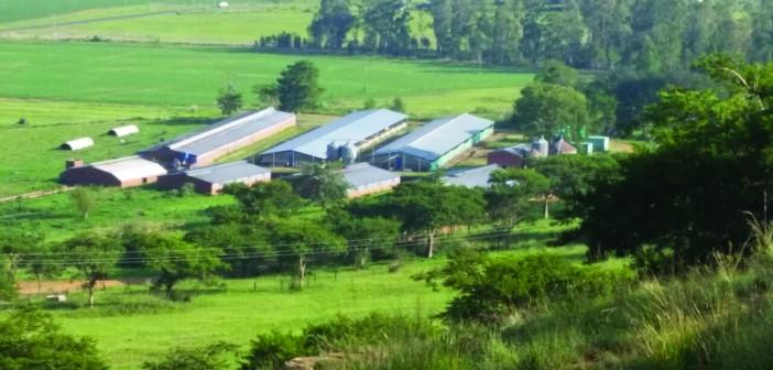 Mike Shattock farm 3