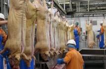 abattoir-workers-696x336