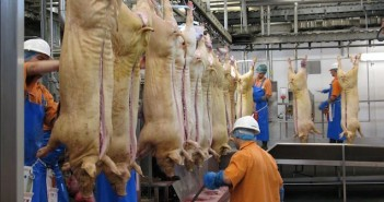 abattoir-workers-696x336
