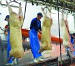 abattoir workers 2