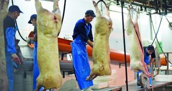 abattoir workers 2