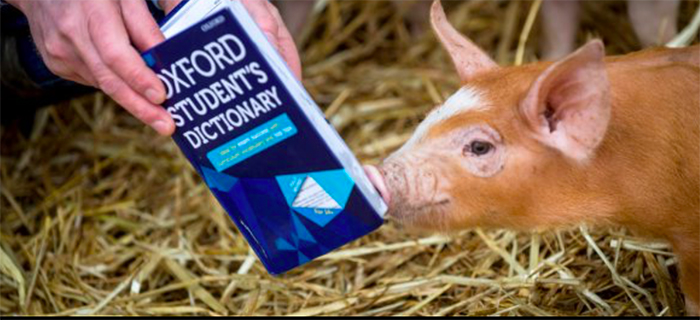 AHDB Pork stunt shortlisted for award