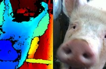 The study sees pigs' facial expressions analysed using state-of-the-art 3D technology