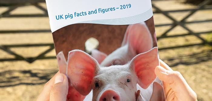 UK pig statistics
