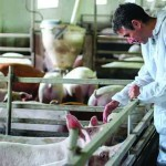 The Pig Health and Welfare Council is keen to engage the unengaged to use good biosecurity each and every time