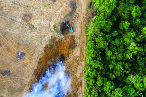 Deforestation is responsible for 12% of the world's greenhouse gas emissions