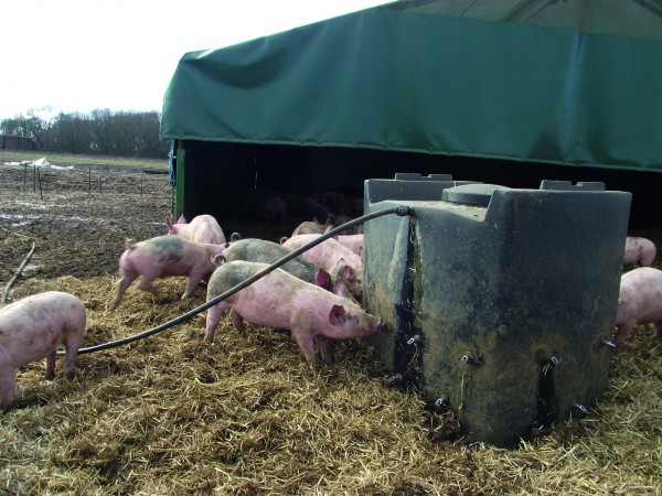 Outdoor sites that have improved water quality have noticed increased water and feed consumption and that pigs appear healthier