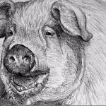 Kate Batchelor drawing
