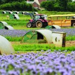 Mark and Paul Hayward will be planting 34ha of nectar-rich plants across their farm for the fourth successive year