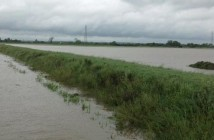 Flood, NFU pic