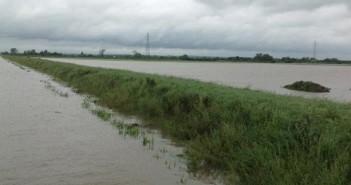 Flood, NFU pic