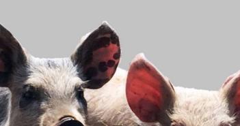 Pig Welfare Code
